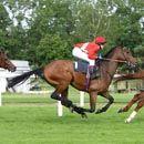 اسب دوانی استقامت